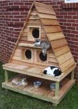 apex-cat-house.jpg
